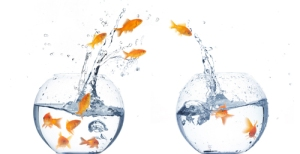 Goldfish jumping from one fishbowl to another.