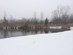 View of our lake in a Christmas Eve snowstorm, 2013