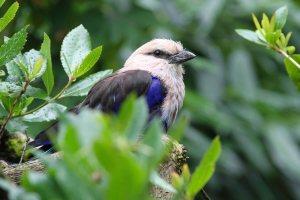 Bird at Woodland Park Zoo (June 2014)