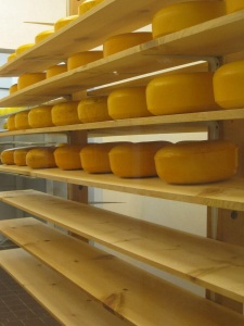 Stacks of gouda cheese wheels
